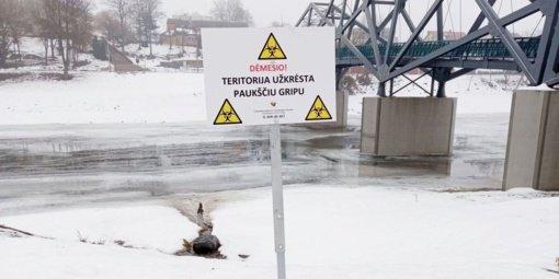 Senamiesčio prieplaukos teritorijoje – paukščių gripo užkratas