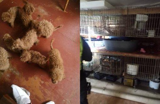 Šunų veisyklos Jurbarke veikla sustabdyta – jurbarkiečiai svarsto, ar ilgam