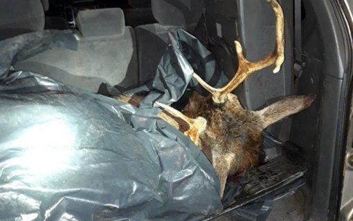 Policija dar mėnesiui pratęsė patikrinimą dėl neteisėtai nušautą elnią vežusio pareigūno