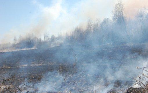 Ugniagesiai prašo nedeginti pernykštės žolės