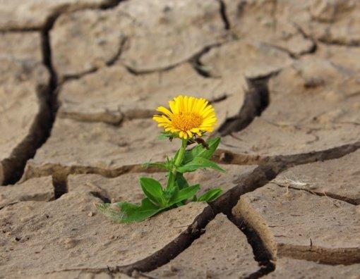 Vasarinės sausros Europoje stipriausios per 2100 metų