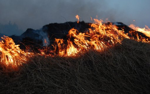 Žolės gaisrai gamtai daro ypač didelę žalą