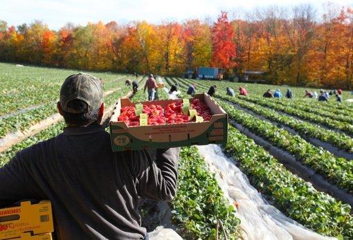 Ūkiuose dirbantys imigrantai skundžiasi išnaudojimu