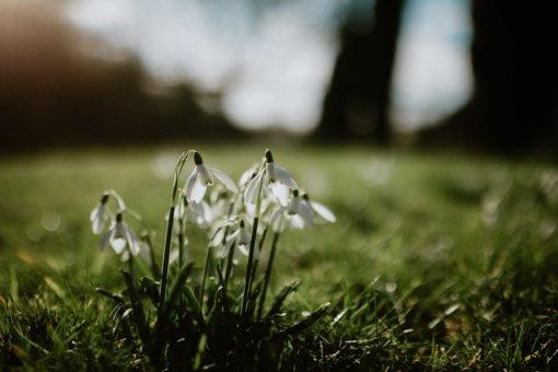 Pakvips pavasariu: šiluma jau pakeliui