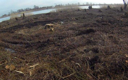 Aplinkos apsaugos departamentas tęsia tyrimą dėl Rusnėje iškirstų medžių