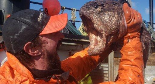 """Iki 2 metrų užaugantį """"jūros monstrą"""" sugavęs žvejys: akimirkai nustėrome"""