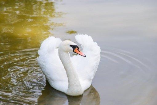 Svarbu: su pavasariu į Lazdijų rajoną gali atkeliauti ir paukščių gripas