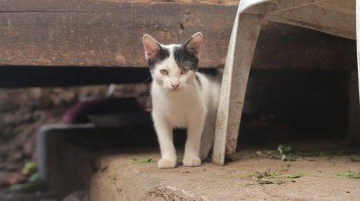 Kauno rajone katę vaikų akivaizdoje mušęs vyras atsipirko 50 eurų bauda
