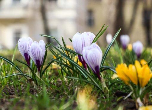 Balandžio 14-oji: vardadieniai, astrologija