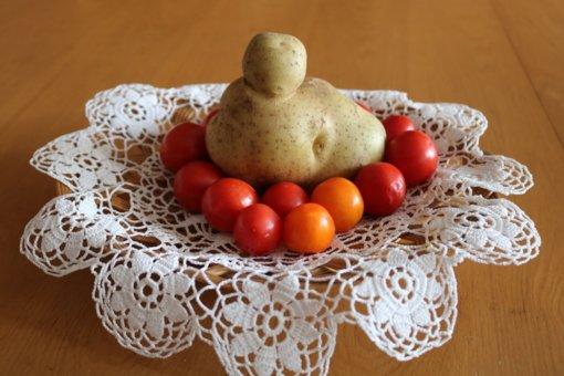 Joniškietės namuose greit žydės bulvė-karalienė