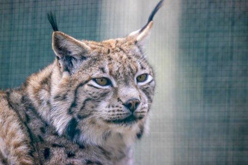 Neteisėtai laikomi laukiniai gyvūnai konfiskuojami