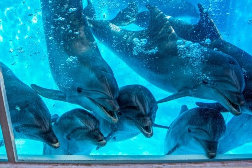 Į Lietuvos jūrų muziejų sugrįžo delfinai