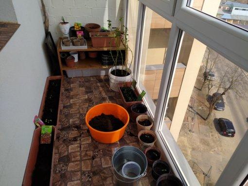 Kiekvienam daržui – sava kaliausė. Gerovės balkonas (6)