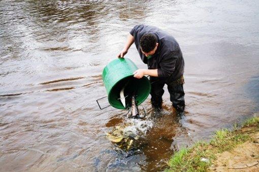 Jonavos rajone į Šventąją išleista 200 eršketų