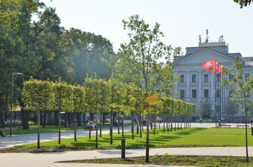 Viešųjų erdvių apželdinimas: kur, kokie medžiai ir kaip jie sodinami mieste?