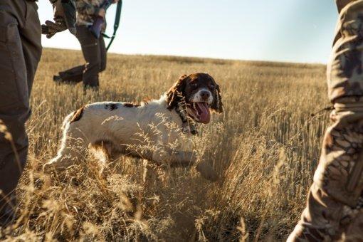 Seimo narys siūlo uždrausti medžioklę su šunimis naktį, nebent ieškoma sužeisto gyvūno