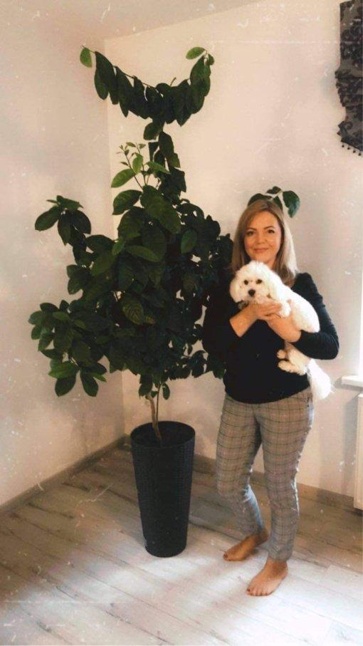 Citrinmedžius auginančią joniškietę pasiekė dovana iš Kauno