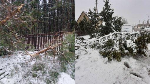 Per naktį ugniagesiai beveik pusšimtį kartų vyko šalinti nuvirtusių medžių