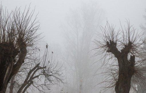 Raseinių rajone eismo sąlygas sunkina rūkas
