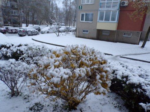 Šaltas pavasaris ir COVID-19