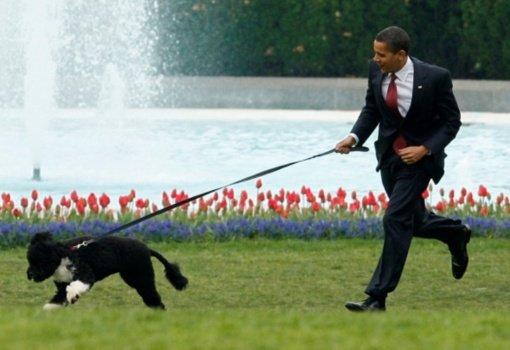 Nugaišo tikra Baltųjų rūmų žvaigžde buvęs B. Obamos šuo