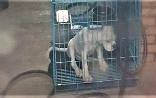 Teismui perduota nelegalią šunų daugyklą Kretingos rajone laikiusios moters byla