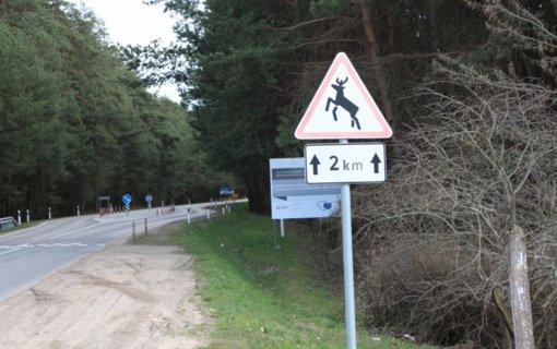 Ukmergės rajone padaugėjo automobilių susidūrimų su laukiniais gyvūnais