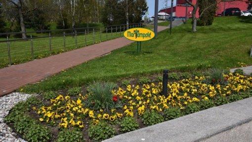 Marijampolė puošiasi pavasariui: bus pasodinta daugiau nei 3500 gėlių sodinukų