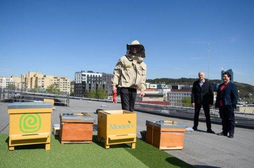 Vilniuje ant verslo centro stogo dūgs bitės