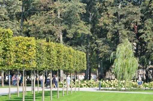 Viešųjų erdvių apželdinimas: ar verta taupyti miesto medžių sąskaita?