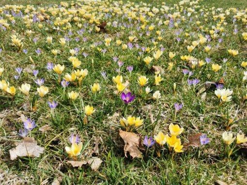 Antrojo karantino dienoraštis. Pavasarišką nuotaiką gadina koronavirusas ir šiukšlės