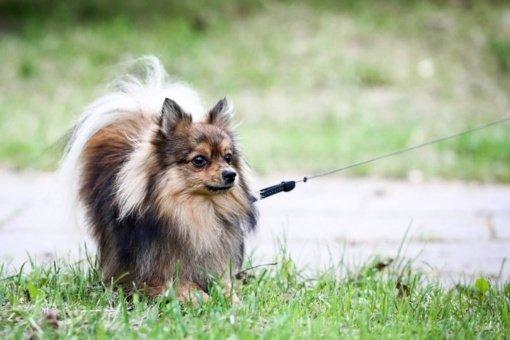 Džiugi žiniai šunų savininkams – leidžiama šunis vedžioti Joniškio miesto parke