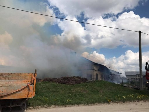 Gaisras Šiaulių rajone: Vijoliuose dega ferma, pasklido išsigandę galvijai (vaizdo įrašas)