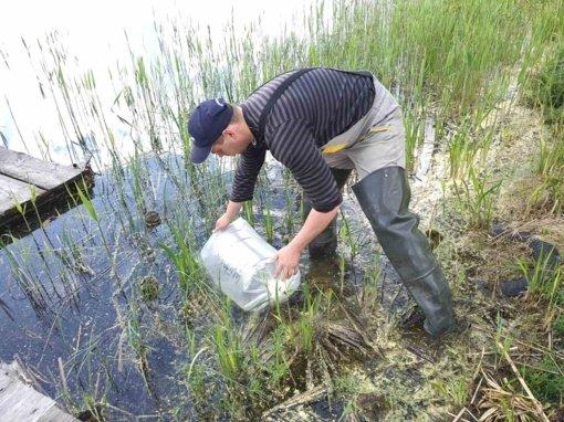 Druskininkų ežerai įžuvinti lydekomis