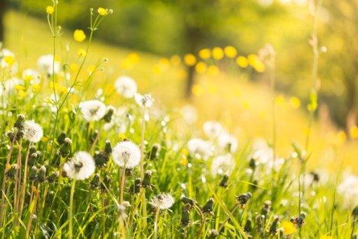Niūrią gegužę keis malonesnės birželio dienos