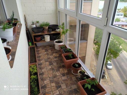 "Gerovės balkonas (9): Gerovės balkono nebrendyla ir ""kosmonauts"""
