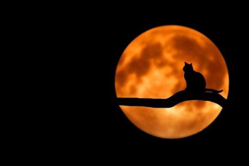 Kaip mėnulio pilnatis veikia kiekvieną Zodiako ženklą?