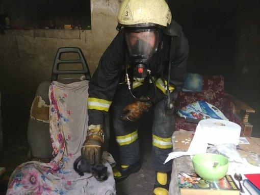 Vilnietis ugniagesys gelbėja ne tik žmones, bet ir gyvūnus: su draugais įkūrė organizaciją beglobiams