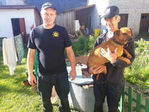 Kelmės ugniagesiai išgelbėjo į šulinį įkritusį šunelį
