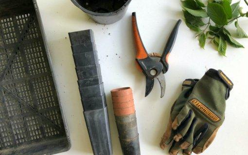 Tinkamas žaliųjų atliekų tvarkymas: kur dėti nuravėtas piktžoles, nužydėjusią gėlę ar nupjautą žolę?