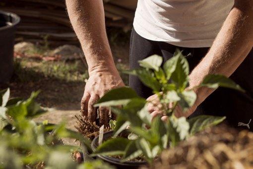 Vasaros sezono pavojai: kokios ligos tyko sode ar gamtoje?