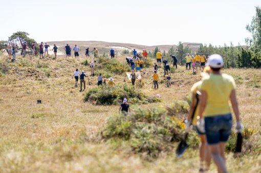 Po savaitgalio Juodkrantė ir Mirusios kopos prašviesėjo – masinės talkos dalyviai išrovė didelius plotus invazinių augalų
