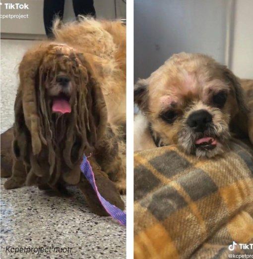 Dėl susivėlusio kailio šuo vos bepaėjo –  išgelbėjo veterinarai