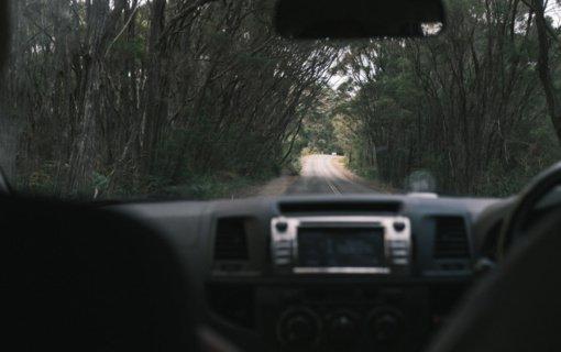 Aplinkosaugininkai primena: kelyje sužeistų gyvūnų pasisavinti negalima