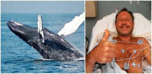 Neįtikėtina: naras išgyveno po to, kai jį prarijo banginis