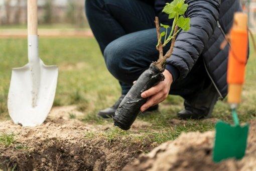 Tyrimas: medžių sodinimas Europoje gali padidinti lietaus kiekį vasaros metu