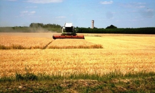 Alytaus rajone ūkininkai jau pjauna miežius, pradeda kulti rapsus