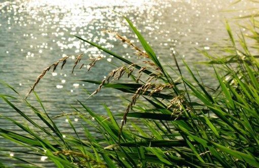 Arimaičių ežero pakrantėse bus griaunami neturintys šeimininkų nelegalūs statiniai