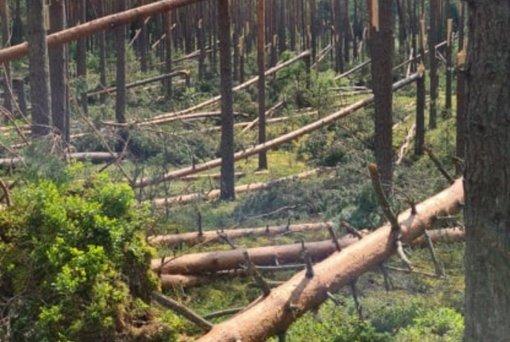 Per audrą savaitgalį išversta ir išlaužyta beveik 10 tūkst. kubinių metrų medžių