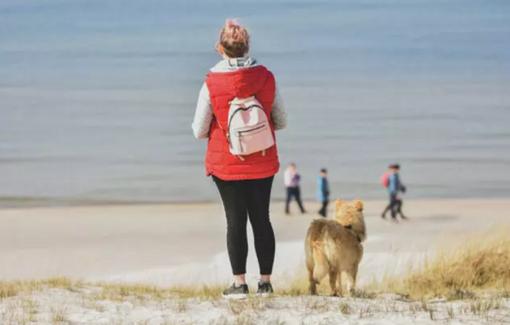 Šunys paplūdimyje - gerai ar blogai?